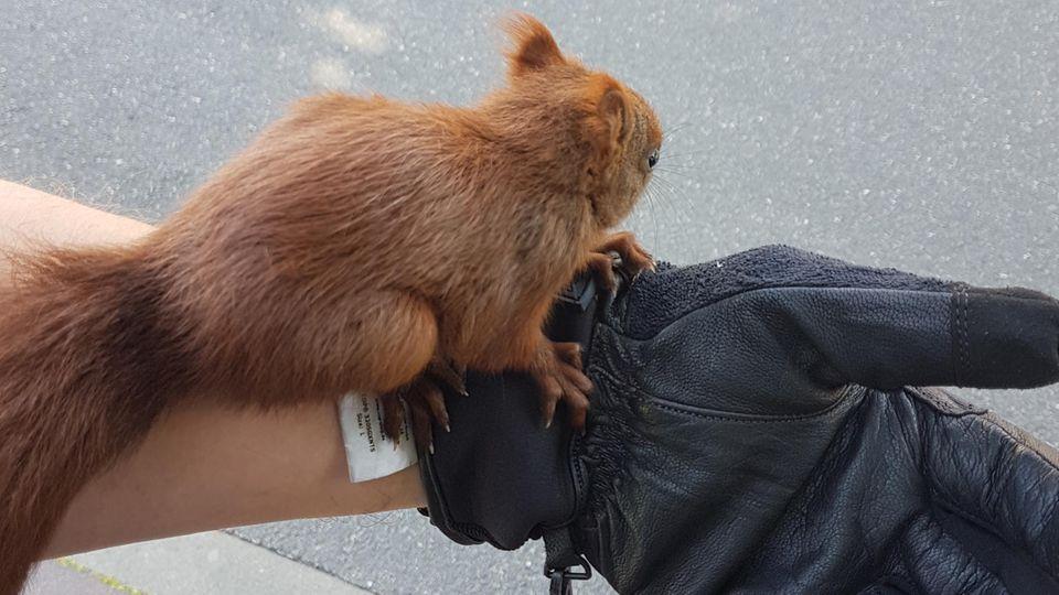 nachrichten deutschland - Eichhörnchen heiligenhafen