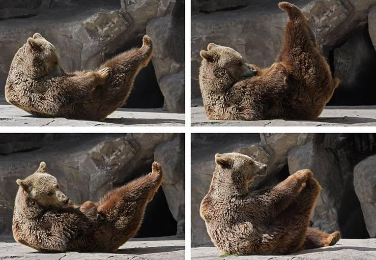 Die süßesten Tierbilder zum Welt-Yoga-Tag   STERN.de