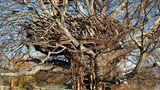 Lake-nest tree house