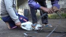 Bali: Fleischhändler wenden brutale Methoden an, um Hunde zu fangen