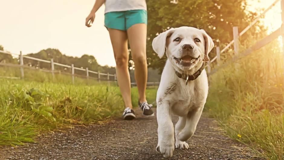 Hund wird Gassi geführt