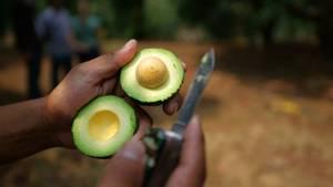 Eine aufgeschnittene Avocado wird in der Hand geahlten