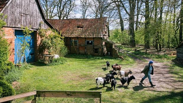 Maria Anna Leenen auf ihrem kleinen Bauernhof. Gesellschaft leisten ihr nur ein paar Ziegen