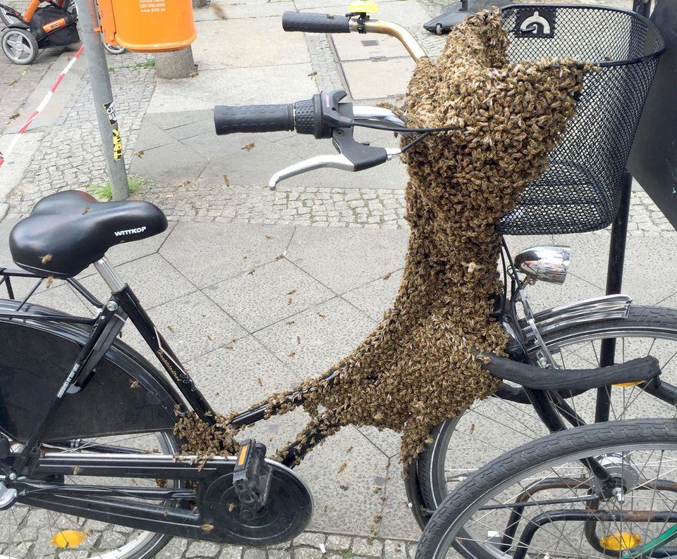 Benutzen auf eigene Gefahr: Ob man mit so einem Fahrrad noch zu einer entspannten Fahrrad-Tour aufbrechen sollte? Tausende Bienen bevölkern das schwarze Damen-Fahrrad und haben - dankenswerterweise - Sattel und Lenker frei gelassen.