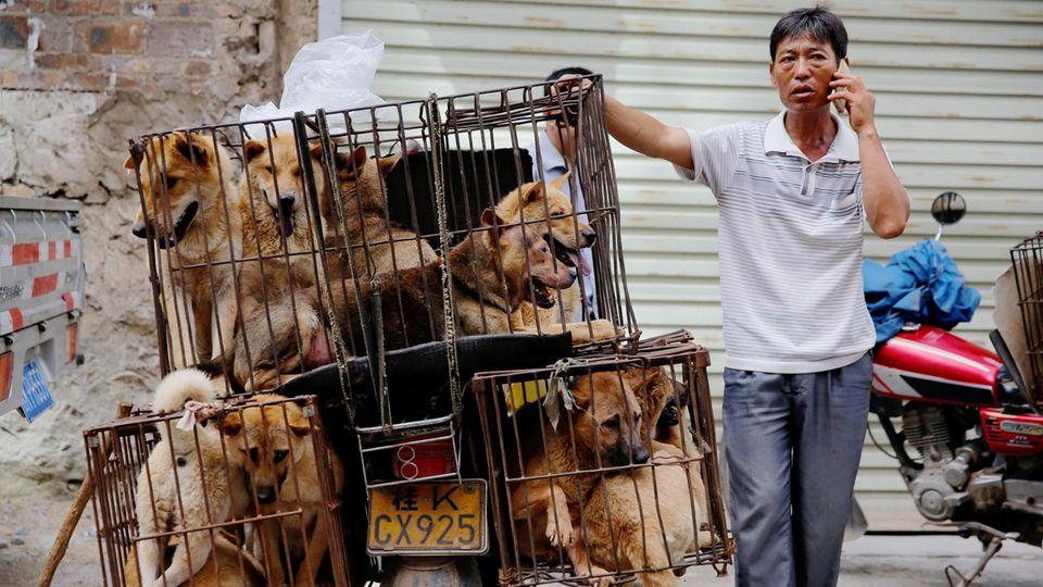 Ein Händler wartet beim Hundefleisch-Festival 2016 auf Kunden