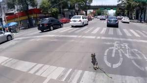 Tierische Jagd: Radfahrer in Mexiko auf Hundefang