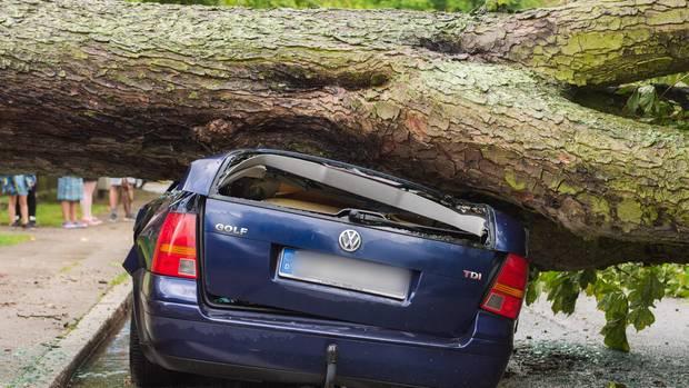 Umstürzende Bäume wie hier in Hamburg sorgten für Blechschäden, Chaos im Verkehr