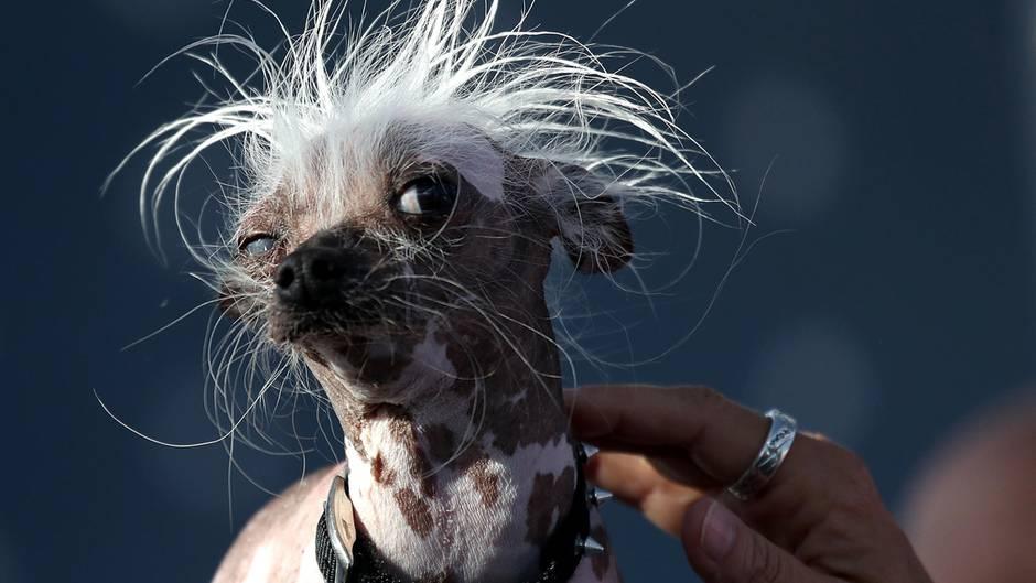 Hunde-Schau: So hässlich und trotzdem kein Sieger | STERN.de