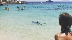Dieser Blauhai versetzte Badegäste auf Mallorca in Panik