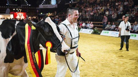 Landwirtschaft: Wer ist die schönste Kuh Deutschlands?