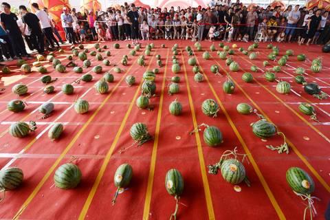 Wer hat die größten Melonen?