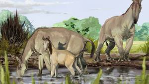 """Dieses Bild zeigt: So könnte das """"langhalsige Lama"""" ausgesehen haben"""