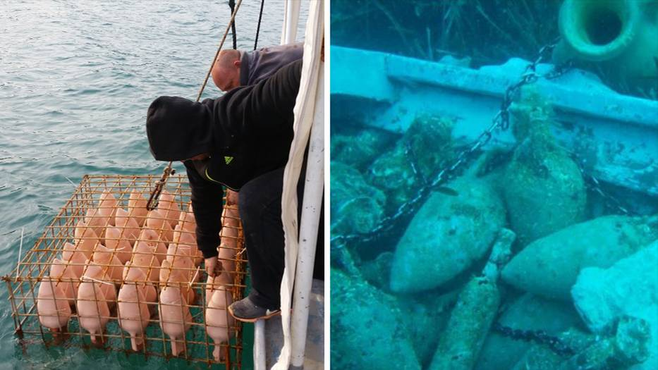 In Käfigen werden die Flaschen auf den Meeresgrund gelassen und mit Schlössern fixiert, dadurch sind sie vor Dieben geschützt