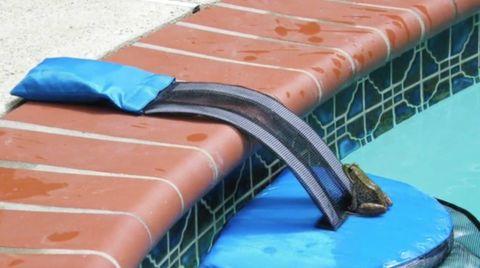 Überführt mit Süßstoff: So viel Pipi lauert wirklich im Schwimmbad-Wasser