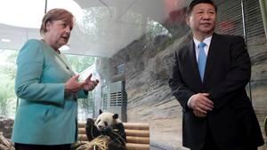Panda-Diplomatie: Angela Merkel, Xi Jinping mit Panda-Bär im Berliner Zoo