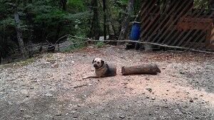 Hund liegt vor Baumstamm - sieht dadurch lang und geteilt aus