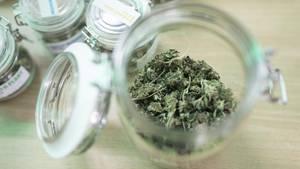 Uruguay verstaatlicht Marihuana-Verkauf in Apotheken