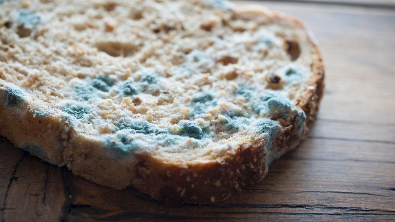 Ihr Brot ist verschimmelt? Dann schmeißen Sie es in den Müll. Schimmelsporen haben bereits das ganze Brot infiltriert - auch wenn es bei den anderen Scheiben noch nicht erkennbar ist. Das Gleiche gilt übrigens für Brötchen, Muffins und anderes Gebäck.