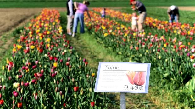 Blumen Online Bestellen Im Test Fleurop Blume 200 Oder Floraprima