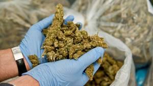 Zollfahnder haben in Bayern in einem Lkw mehr als eine halbe Tonne Marihuana entdeckt (Archivbild eines anderen Fundes)