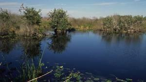 Ein Gewässer im US-Bundesstaat Florida (Symbolbild)