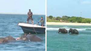 Elefanten-Rettung in Sri Lanka