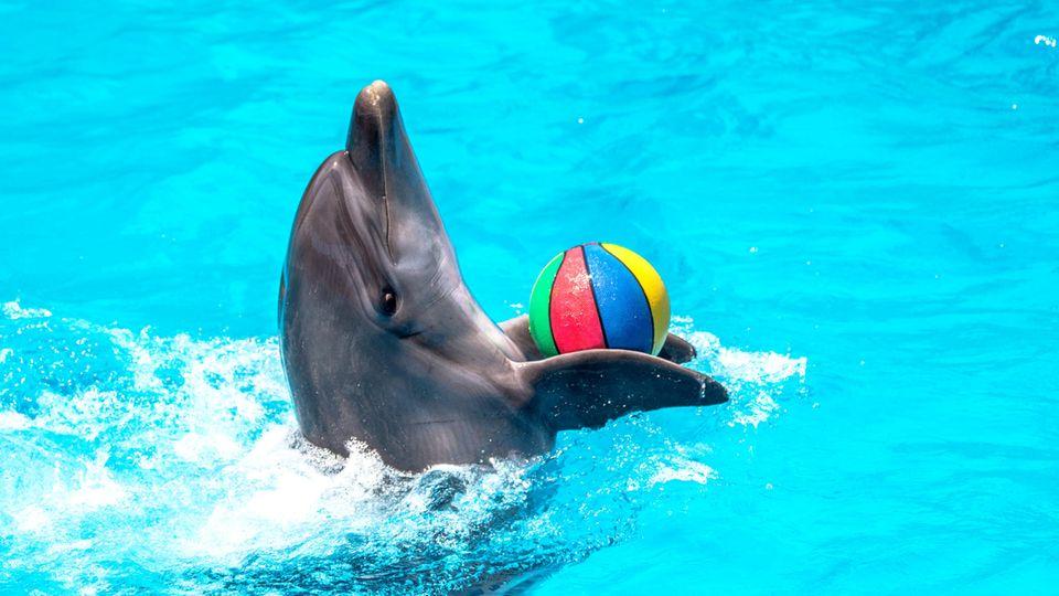 Delfin in Schwimmbecken