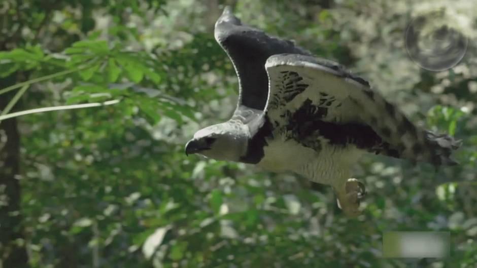Bedrohte Tierart: Diese Riesenvögel sind vom Aussterben bedroht