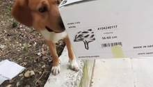 Griechenland: Hund findet Box mit ausgesetzten Kätzchen - und rettet ihnen das Leben