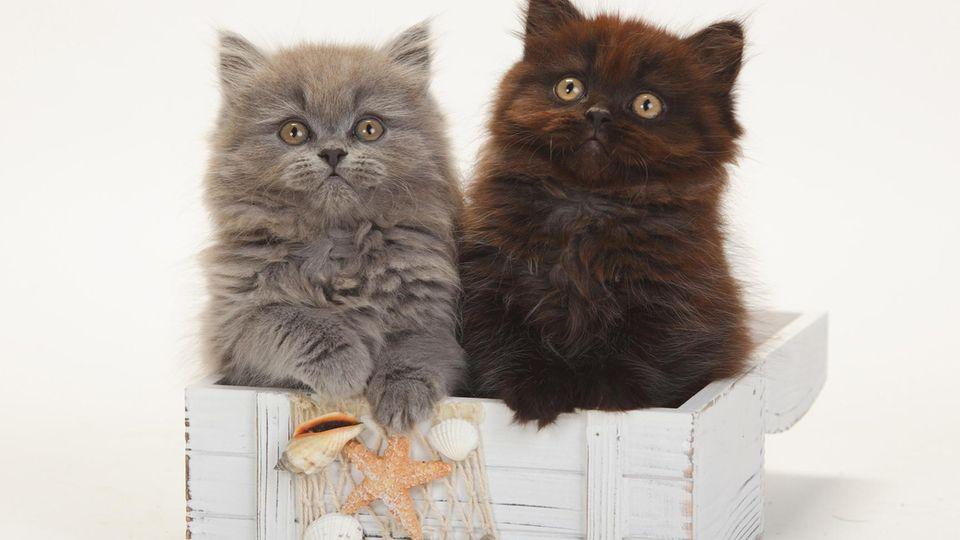 Ländervergleich: Wo die größten Katzenliebhaber wohnen