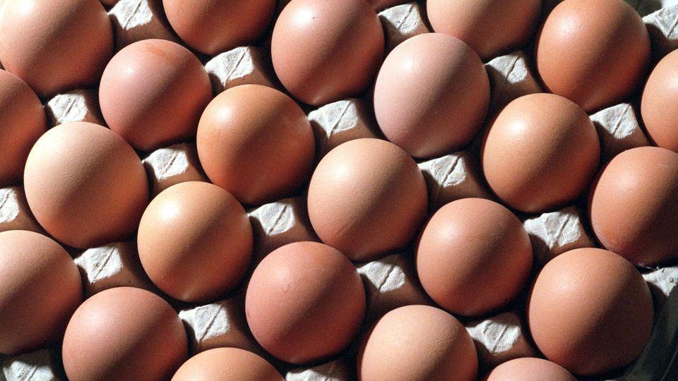 Millionen Eier in Holland wurden zurückgerufen. Symbolfoto von einer Eierpalette