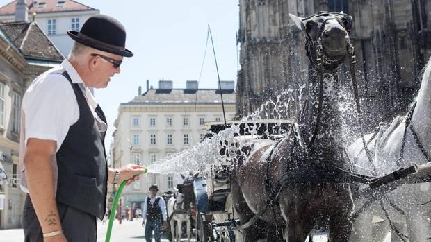 Kühle Dusche für Kutschpferde: Die Fiakerpferde in Wien haben hitzefrei