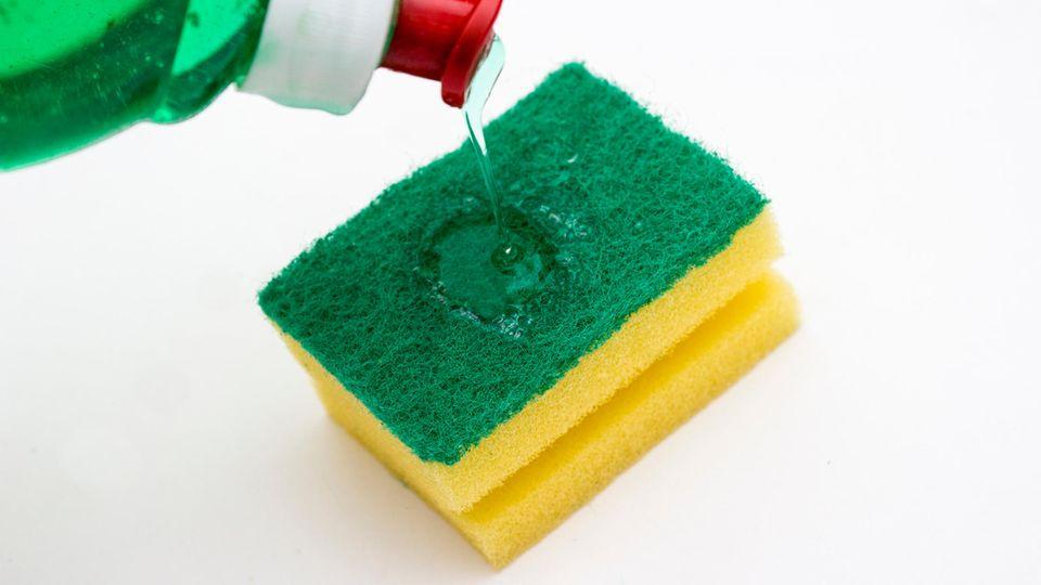 Küchenschwämme sind oft erheblich mit Bakterien belastet