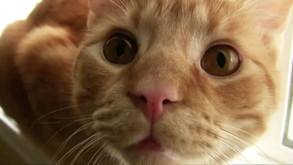Krankheitsanzeichen: Bei diesen Symptomen sollten Sie mit Ihrer Katze zum Tierarzt gehen