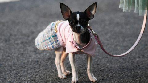 Chihuahua in Einkaufszentrum totgetreten - nun ermittelt die Polizei