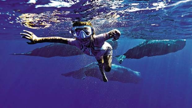 Guillaume Nérys Tochter Maï-Lou ist gerade mal fünf Jahre alt. Doch die Begegnung mit den Walen wollte sie sich nicht entgehen lassen