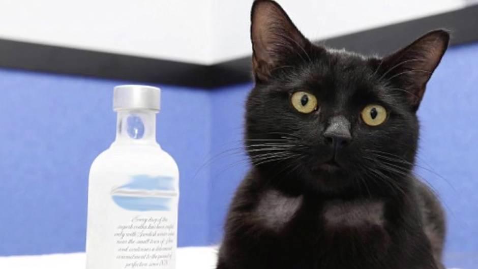 Ungewöhnliche Heilung: Wodka rettet Katze das Leben