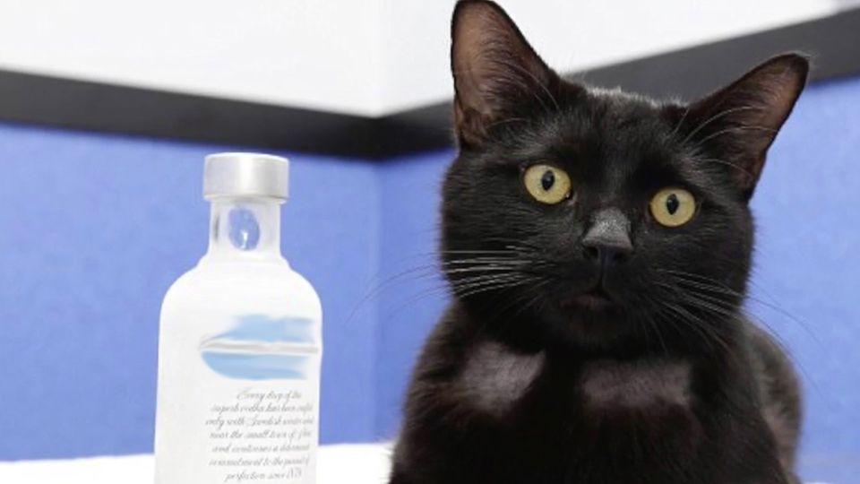 Gestohlen aus einer Bar in Dänemark: Der teuerste Wodka der Welt ist wieder aufgetaucht – leer getrunken