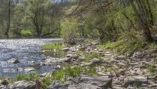 Der Kocher ist ein Nebenfluss des Neckars und mündet nördlich von Heilbronn