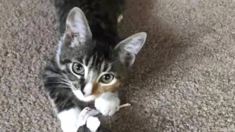 Twerkender Stubentiger: Katze tanzt scheinbar - dahinter verbirgt sich ein trauriges Schicksal