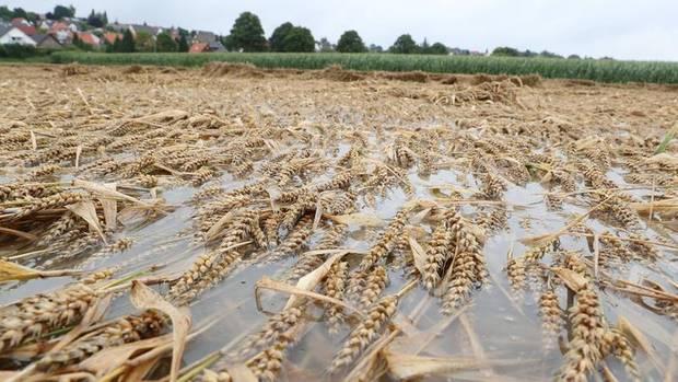 Heersum, Landkreis Hildesheim, Niedersachsen: Die Wassermassen überfluten ein Kornfeld und vernichten die Ernte