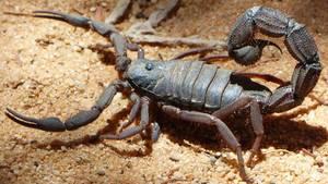 Skorpiongift gegen Krebs