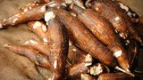 Maniok     Maniok sind stärkehaltige Wurzelknollen, die ursprünglich aus Südamerika stammem und mittlerweile weltweit verbreitet sind. Ähnlich wie die Bittermandeln sind die Wurzelknollen in rohem Zustand giftig, denn auch sie enthalten Blausäure, die bei übermäßigem Verzehr zum Tod führen können. Problemlos sind die Wurzeln abgekocht.