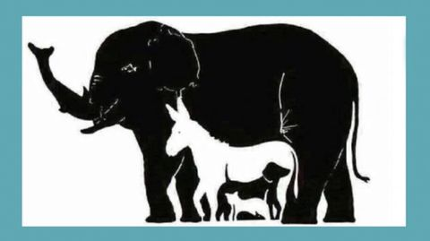 Auf diesem Bild verstecken sich 16 Tiere - erkennen Sie alle?