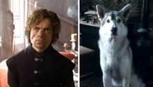 Peter Dinklage macht auf das Schicksal von Huskies aufmerksam