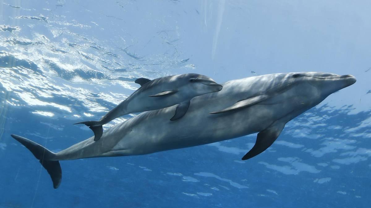 Babydelfin