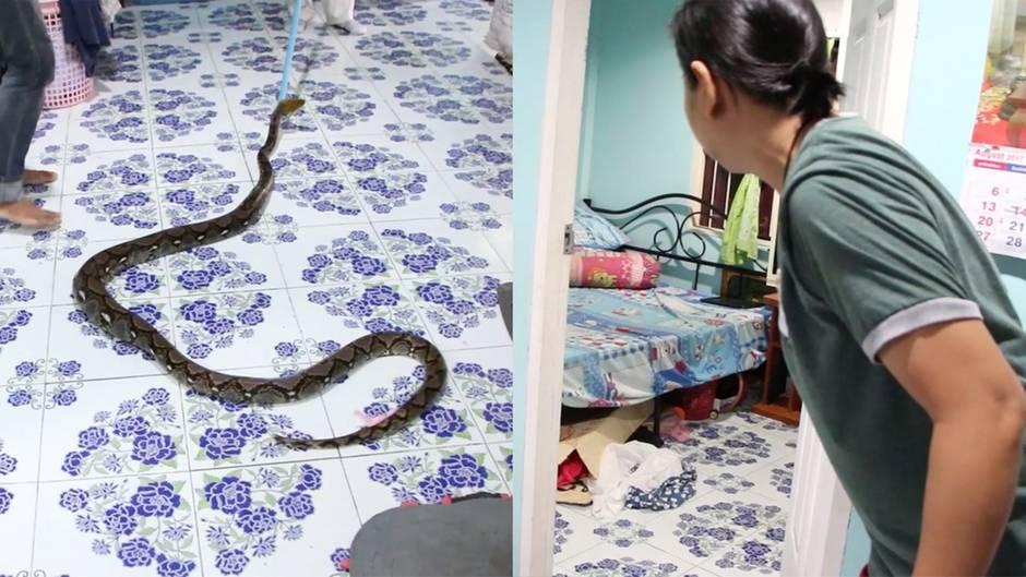 Thailand: Gewaltiger Python versteckt sich unter dem Bett eines 13-Jährigen