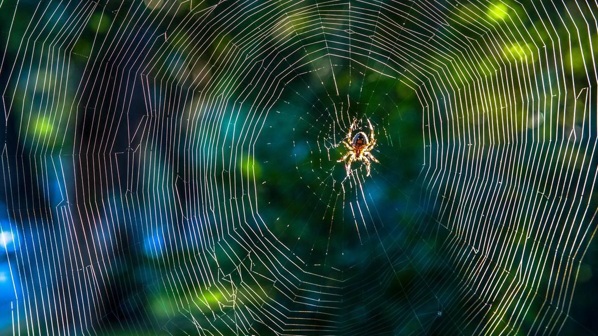 spinnen fernhalten mit dieser pflanze kommen spinnen. Black Bedroom Furniture Sets. Home Design Ideas