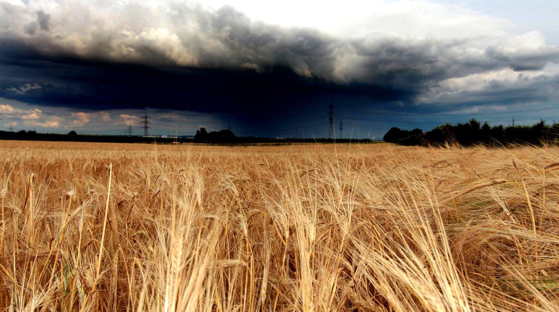 Schlechtes Wetter vermasselt die Ernte