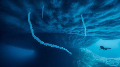 Eisstalaktiten, die wie Tentakel aus dem Meereis ranken, sind von kurzem Bestand und ein rarer Anblick. Sie entstehen, wenn eingeschlossenes, eiskaltes Salzwasser aus dem Eis entweicht und das weniger salzige Meerwasser gefrieren lässt.